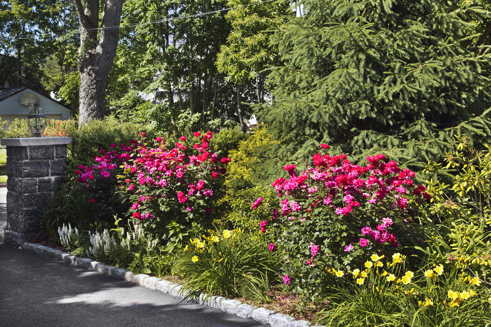 3-Victorian-perennial-rose-garden.jpg