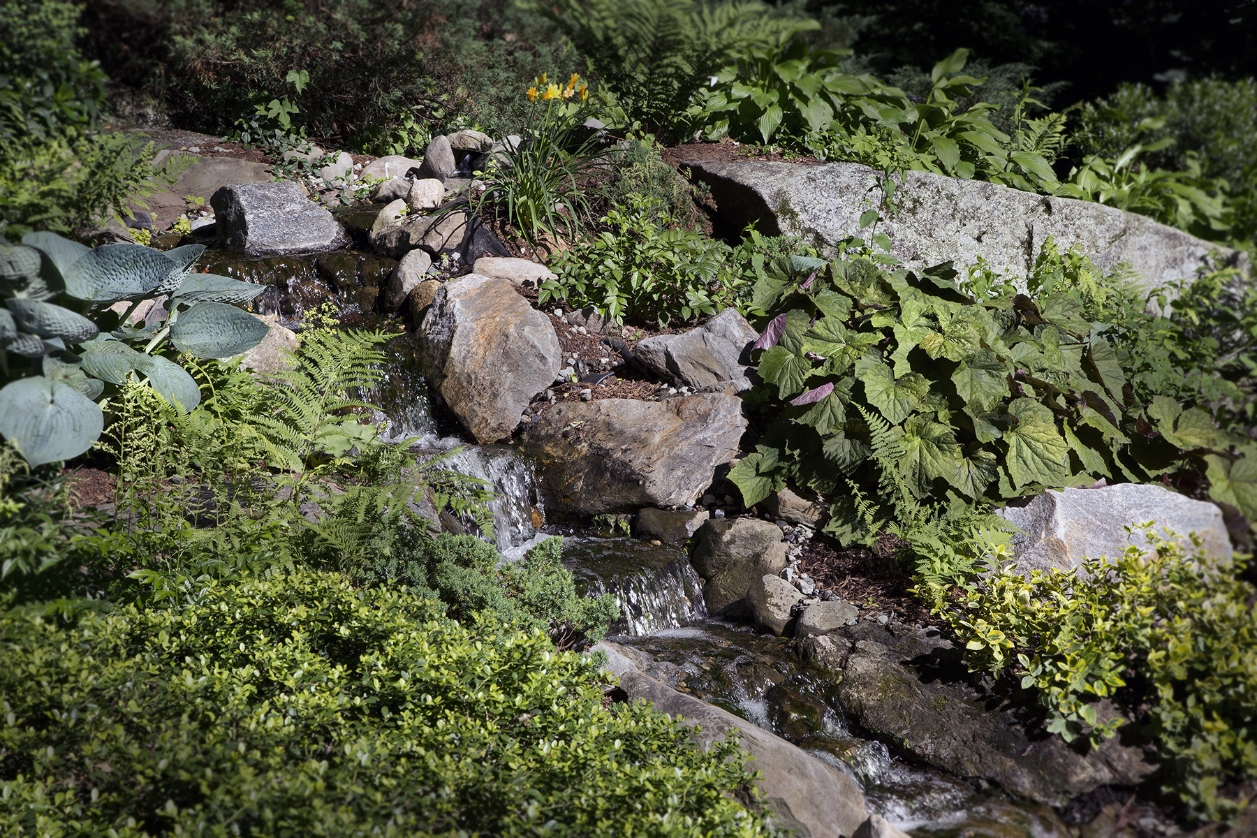 4-Native-plants-and-pond.jpg