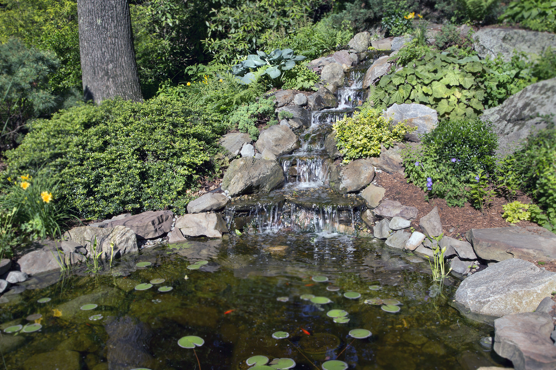 8-Native-plants-and-pond.jpg