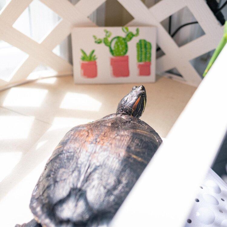 My Pet Turtle Part 5 100 Gallon Enclosure Evan T Perry
