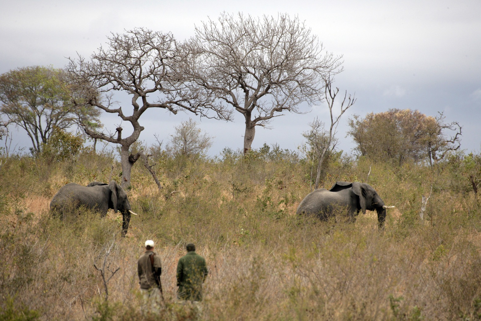 Alex and Renias walking with the majestic elephants