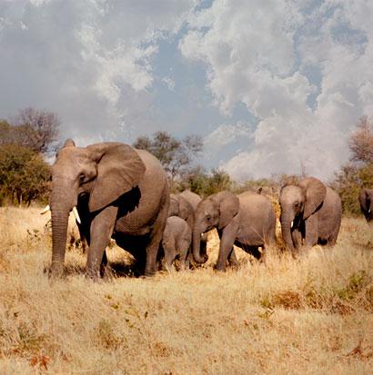 Elephants on Home Page.jpeg