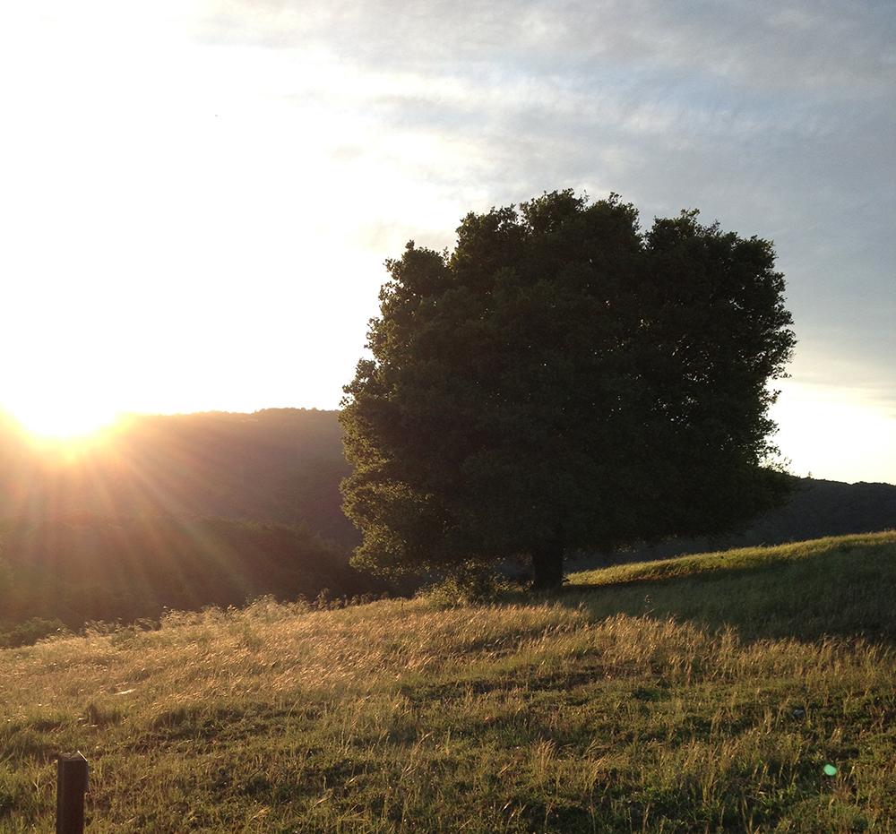 Sunset oaktree (1).JPG