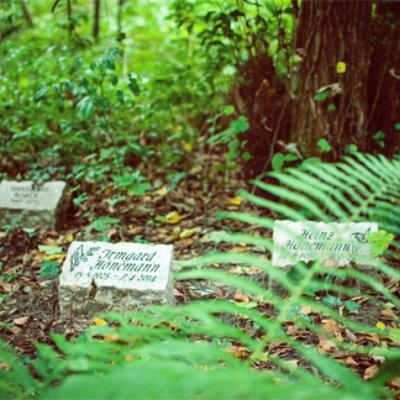 Beisetzungen unter Bäumen auf dem Südwestkirchhof Stahnsdorf