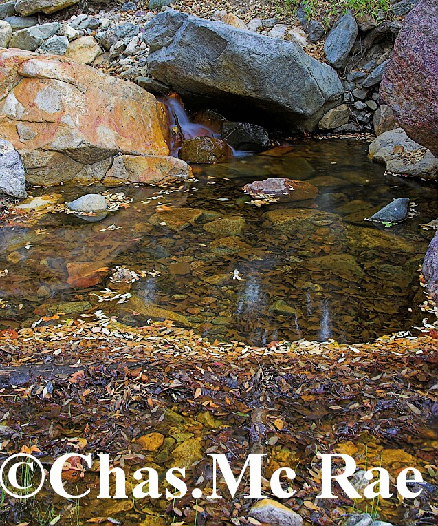 Maderia_Canyon_Arizona_15708WR06_01.jpg
