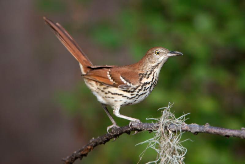 _MG_0616-Birds_SC.jpg