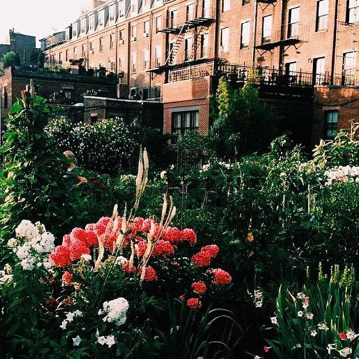 Flowers_in_Boston_SouthEnd