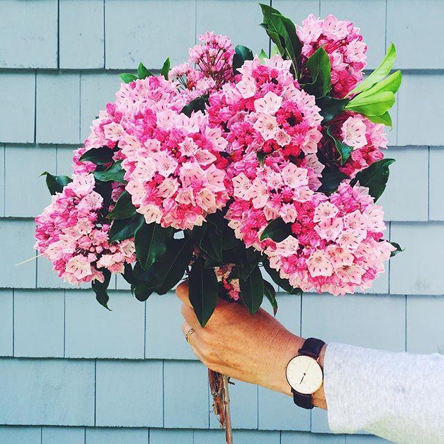 Beautiful Pink Flowers. Simply Elegant Blog.