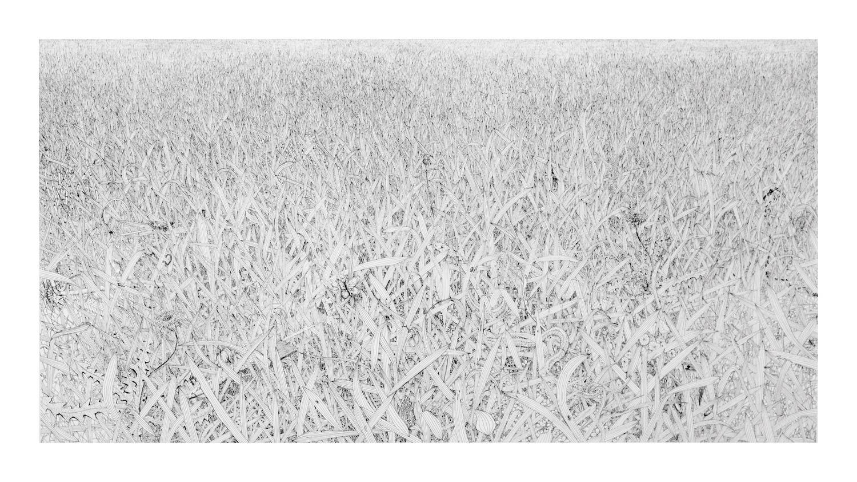 Grass #3