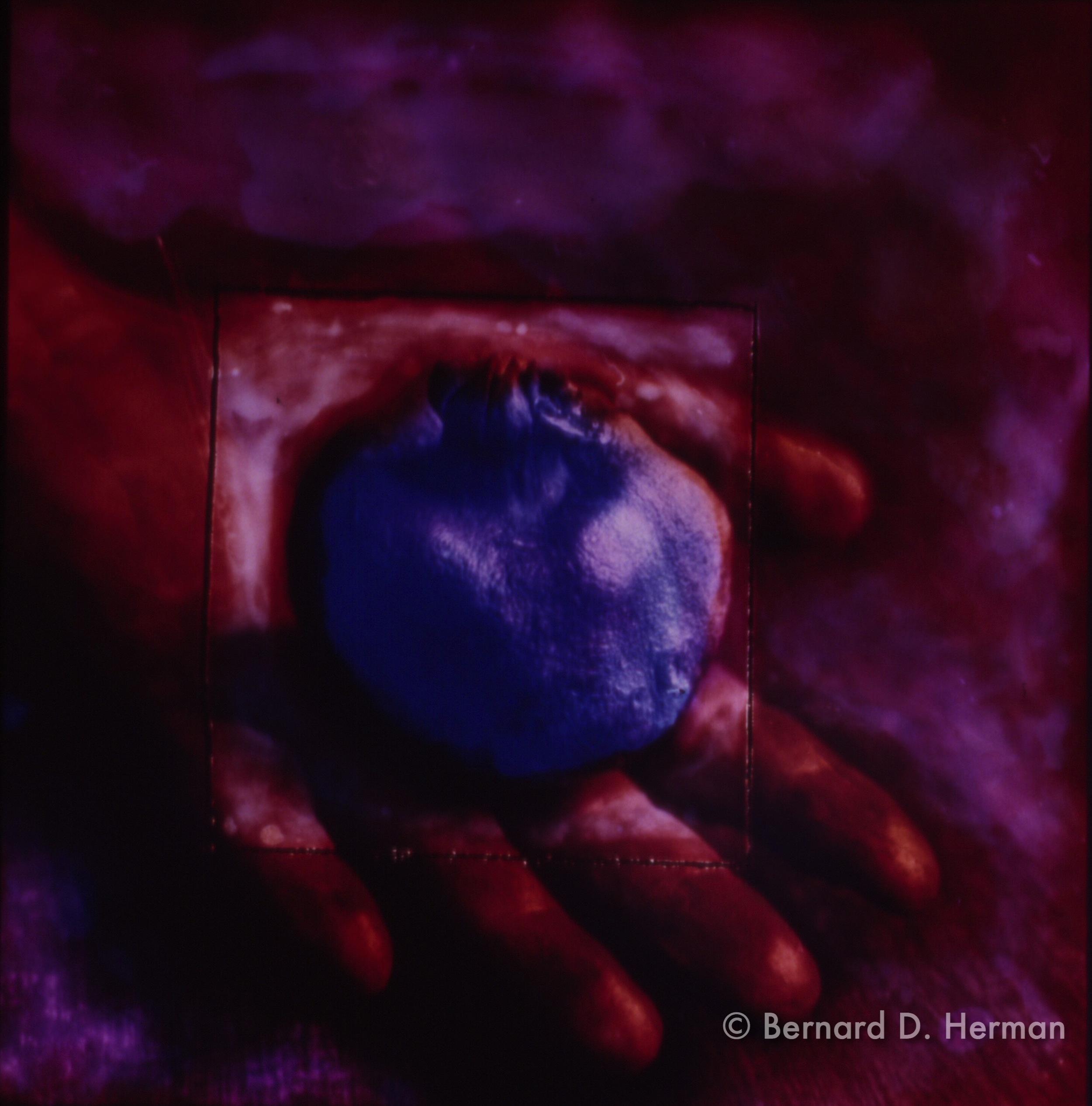 Handful of Blue Pomegranate
