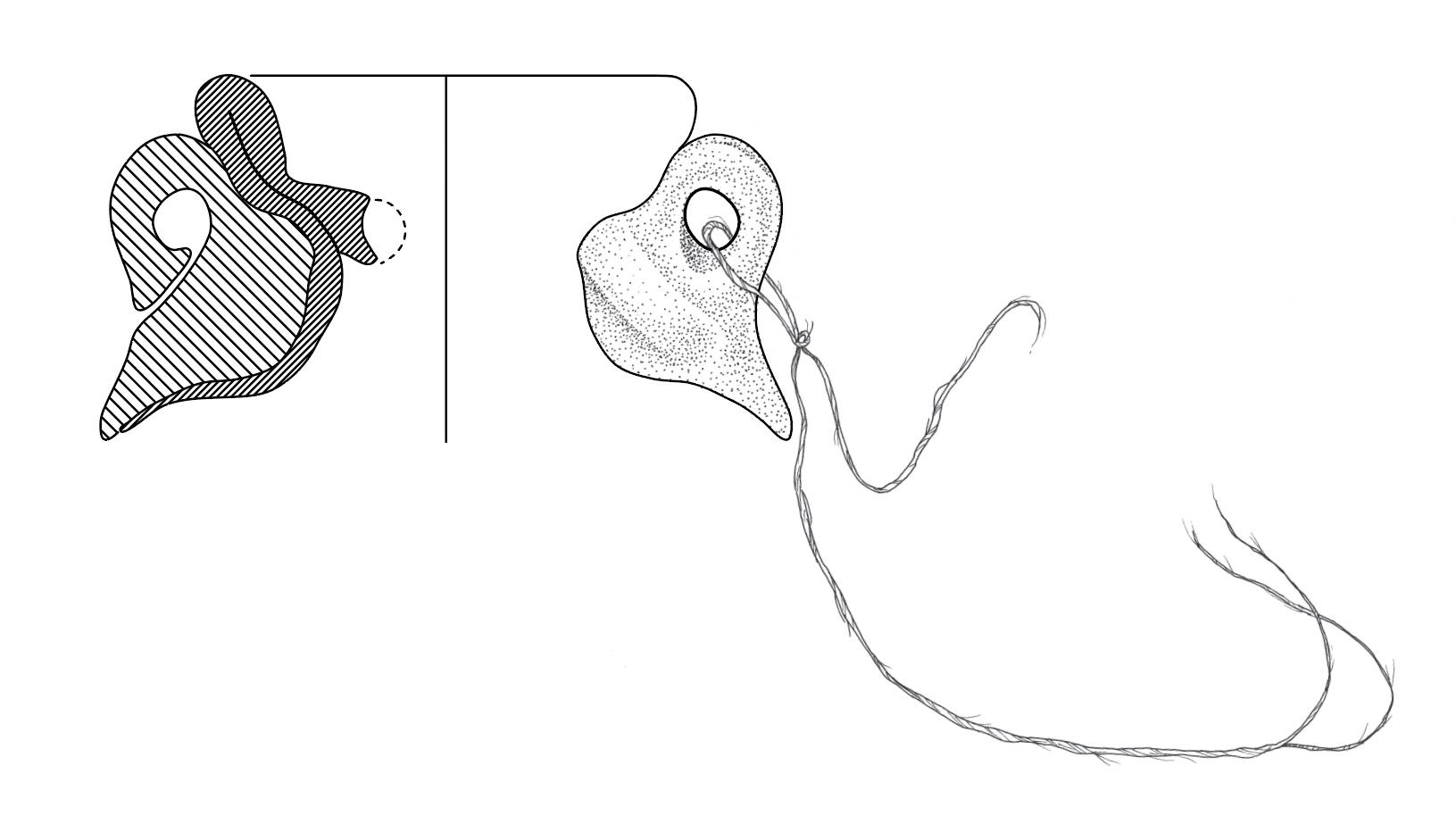 Vessel Profile  Pen / Adobe Illustrator