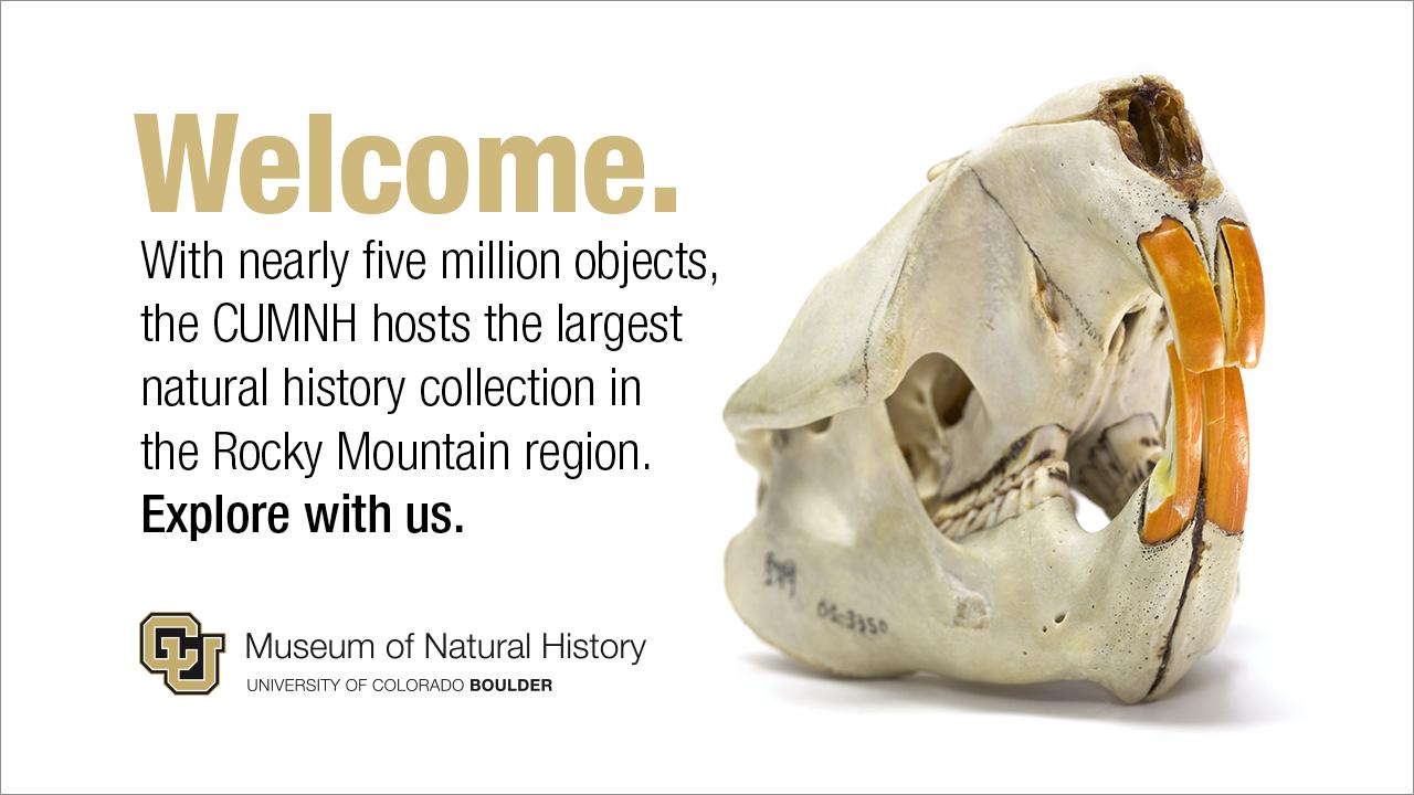 PowerPoint Slide  University of Colorado Natural History Museum Adobe Photoshop