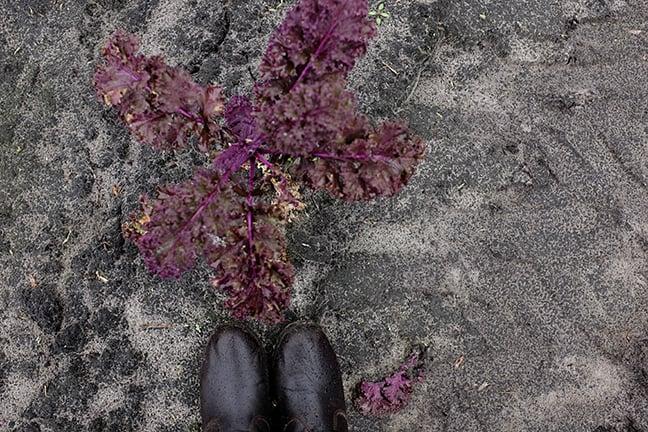farm_boots.jpg