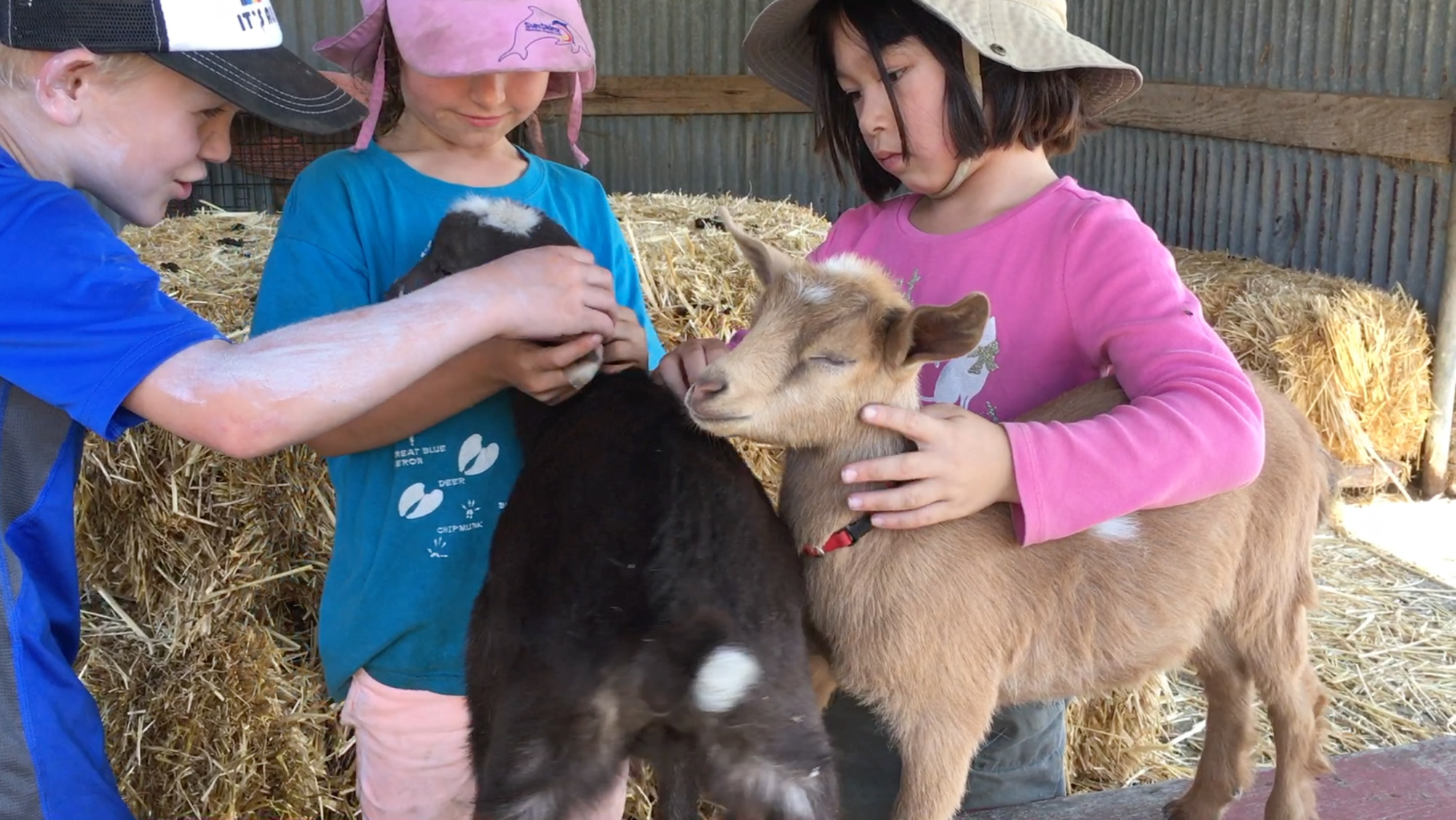 farm kids and goats.jpg