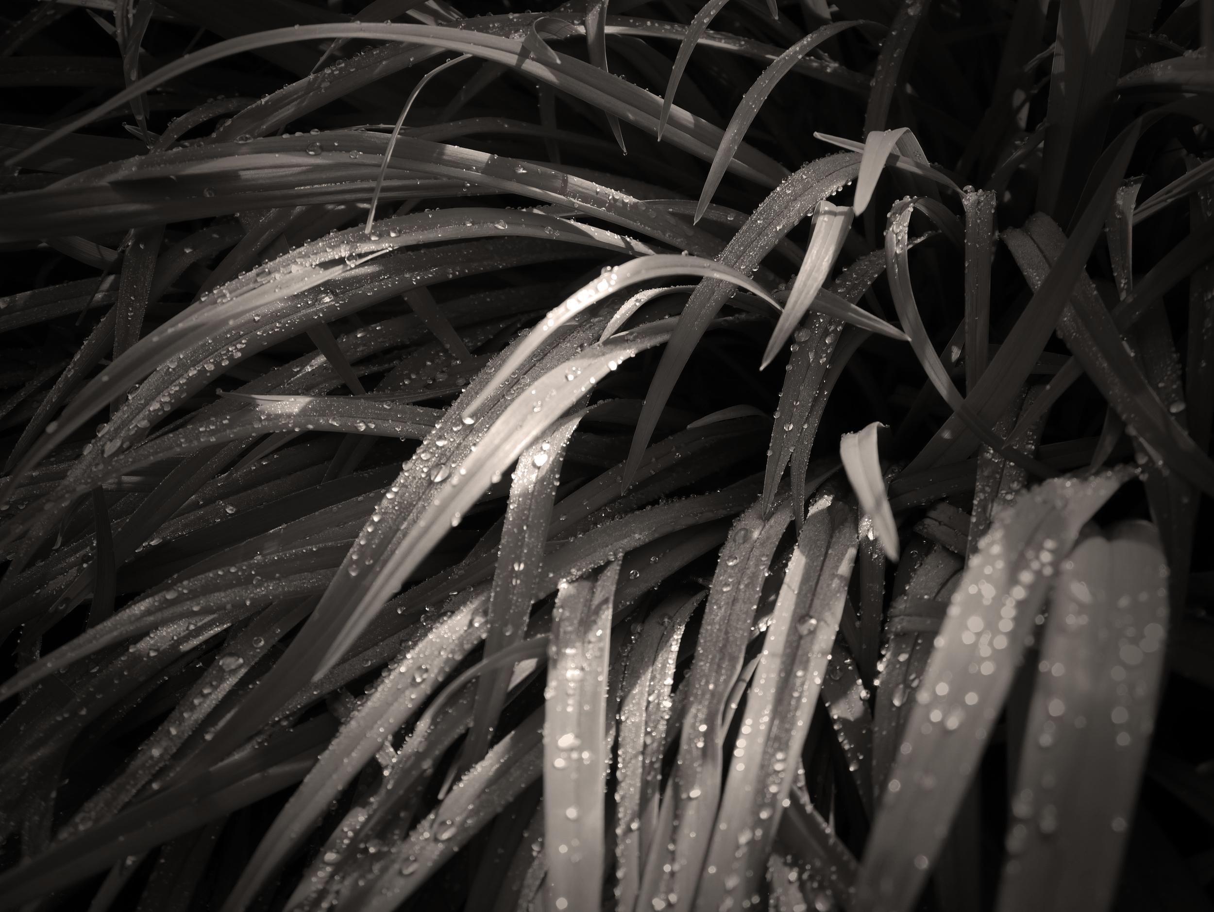 Grass WLLG.jpg