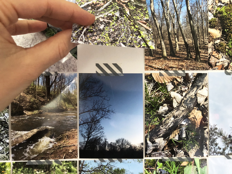 100 Nature Walks : Looking Back at My #The100DayProject 2018 | Nicole Reaves