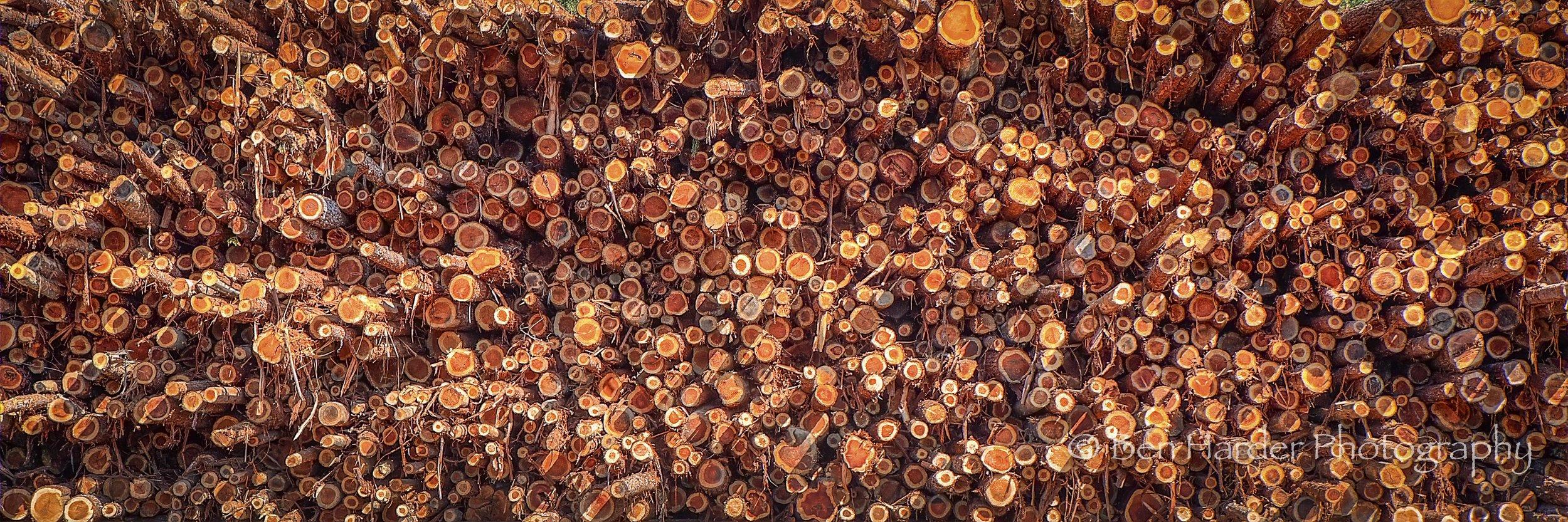 """Lincoln Logs"" - Northern California"