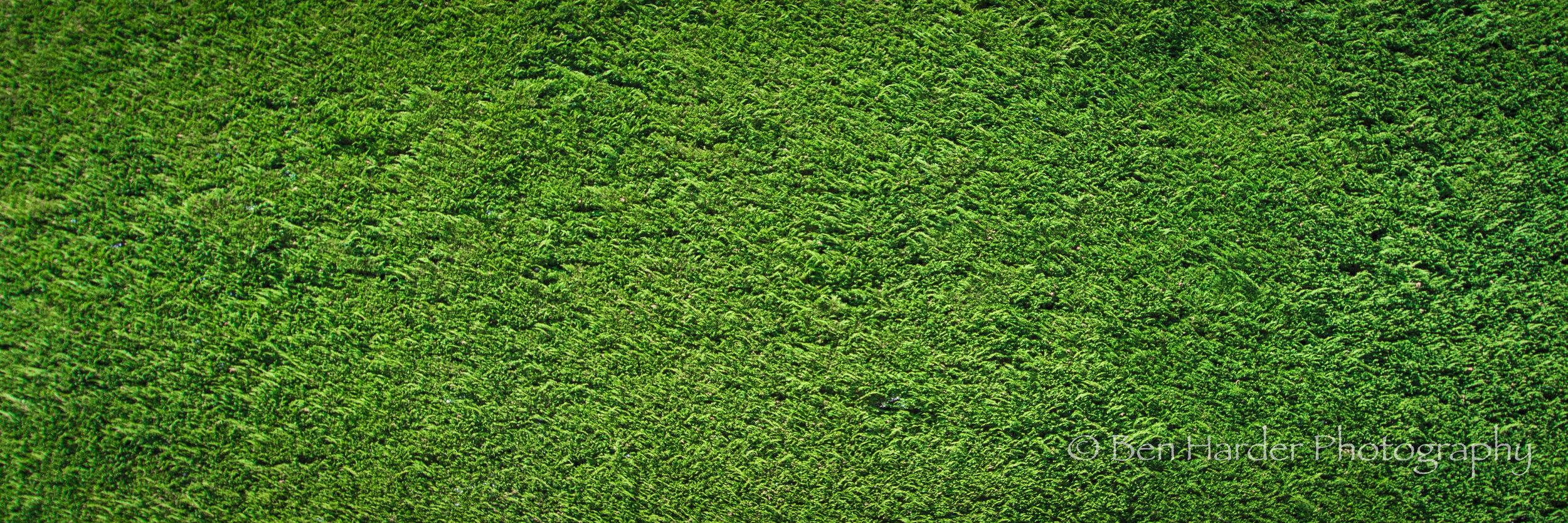 """Hedge"" - Buchart Gardens, BC, Canada"