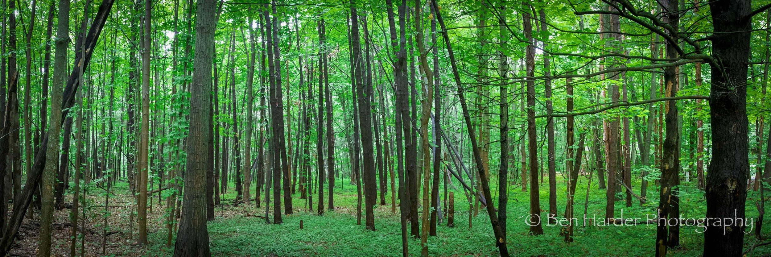 """""""Wilderness"""" - Fennville, MI"""