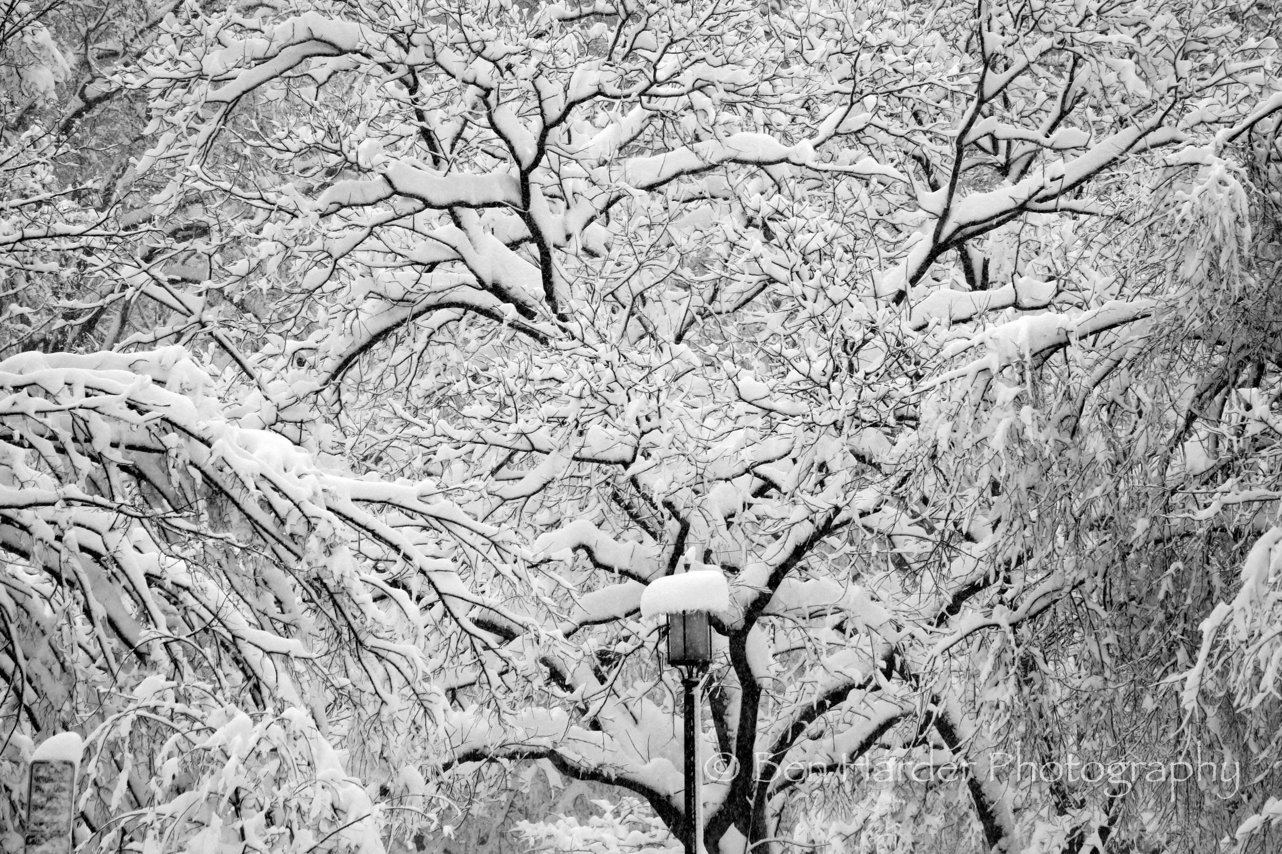 """Narnia"" - Washington, D.C."