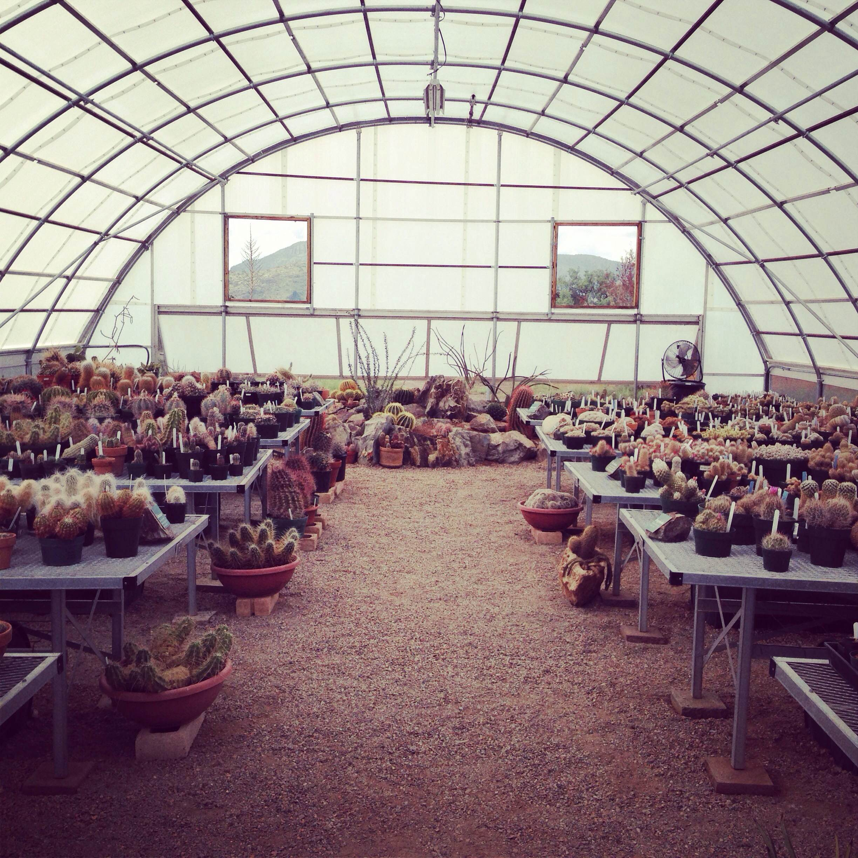 Location: Greenhouse, Chihuahuan Desert Nature Center, Fort Davis, Texas