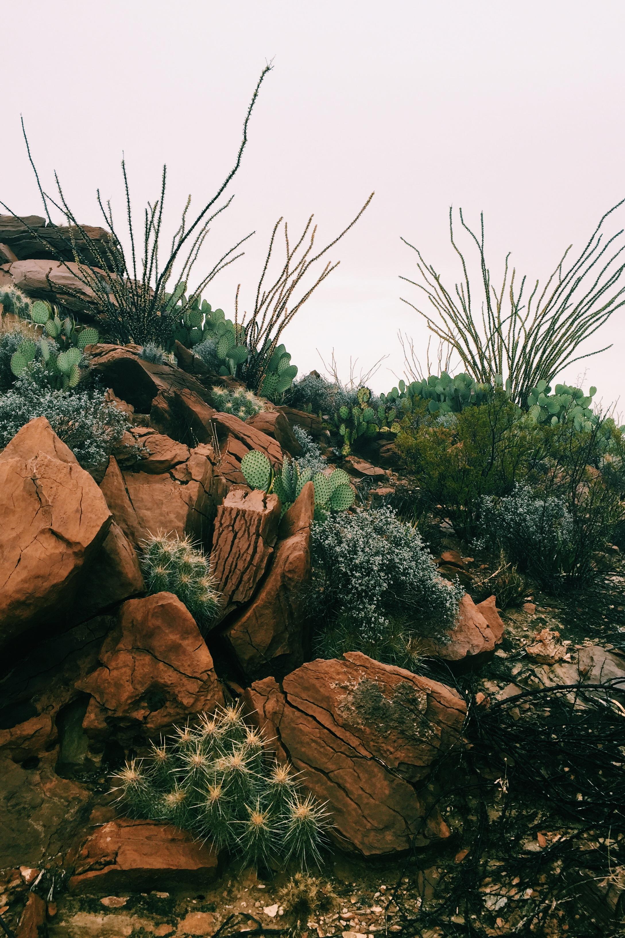 Cacti among boulders near Croton Spring