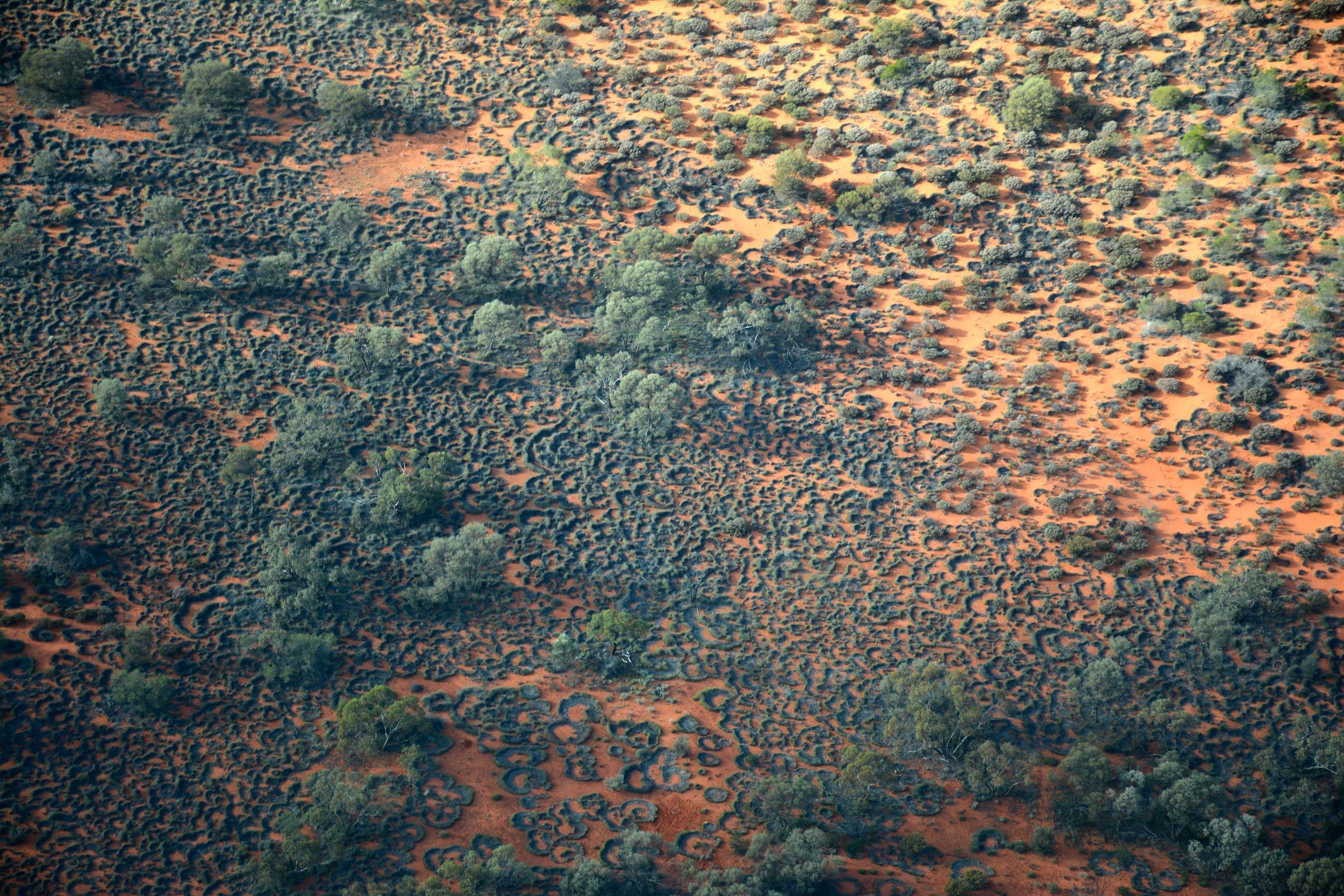 © Photo Aboriginal Signature - Spinifex country. Vue du ciel des buissons de Spinifex dans le désert.