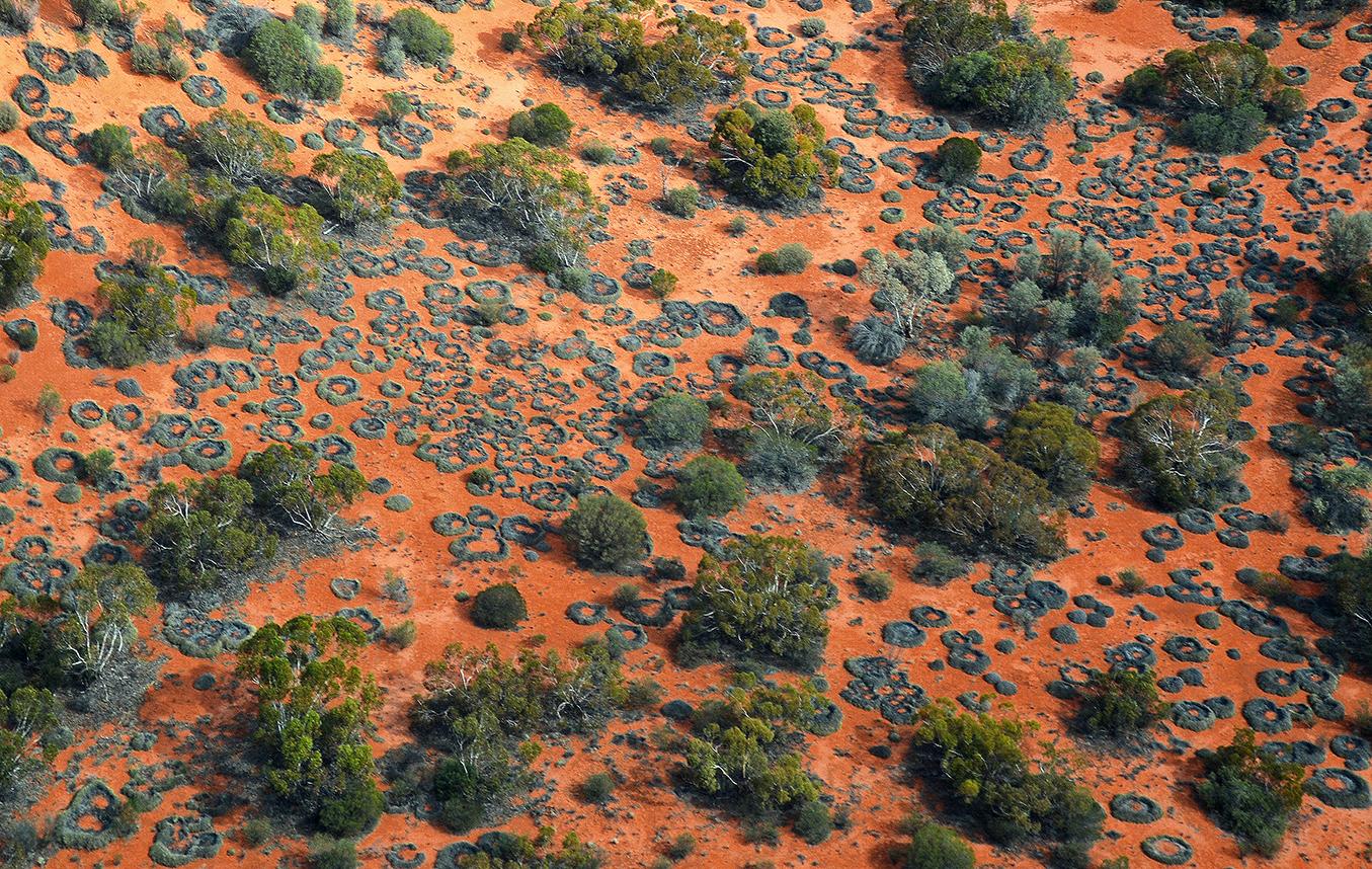 Territoire du Spinifex Art Project. Les cercles végétaux sont constitués par les herbes du Spinifex qui au fil des années se désagrègent en leur centre pour former des corolles fascinantes vue du ciel. © Photo : Aboriginal Signature gallery, en 2014.