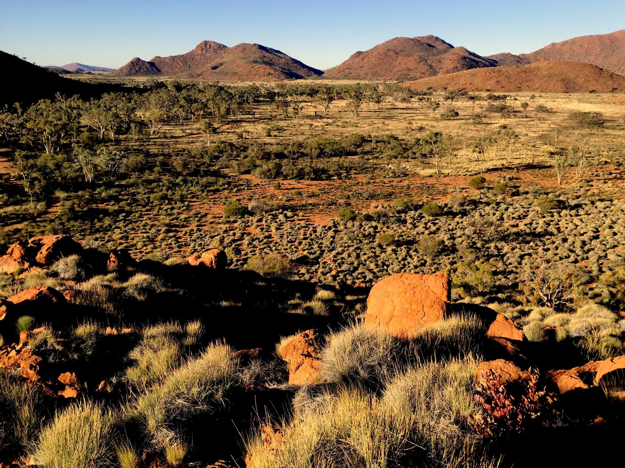 Les buissons de Spinifex dans le APY land. © Photo: Aboriginal Signature Estrangin Fine Art