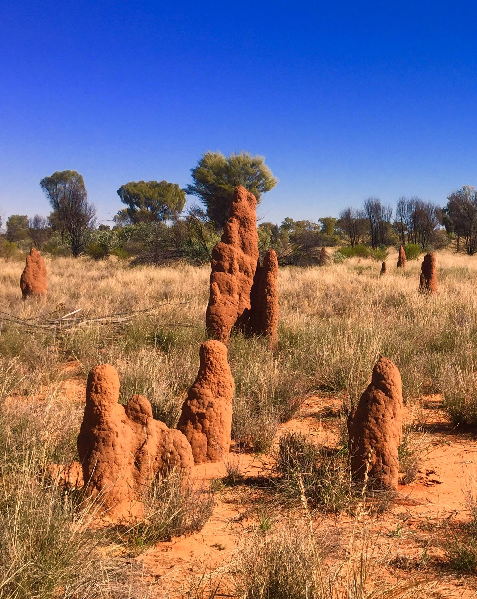 Les termitières élancées avant d'arriver au centre d'art d'Ikuntji. © Photo : Aboriginal Signature • Estrangin Gallery
