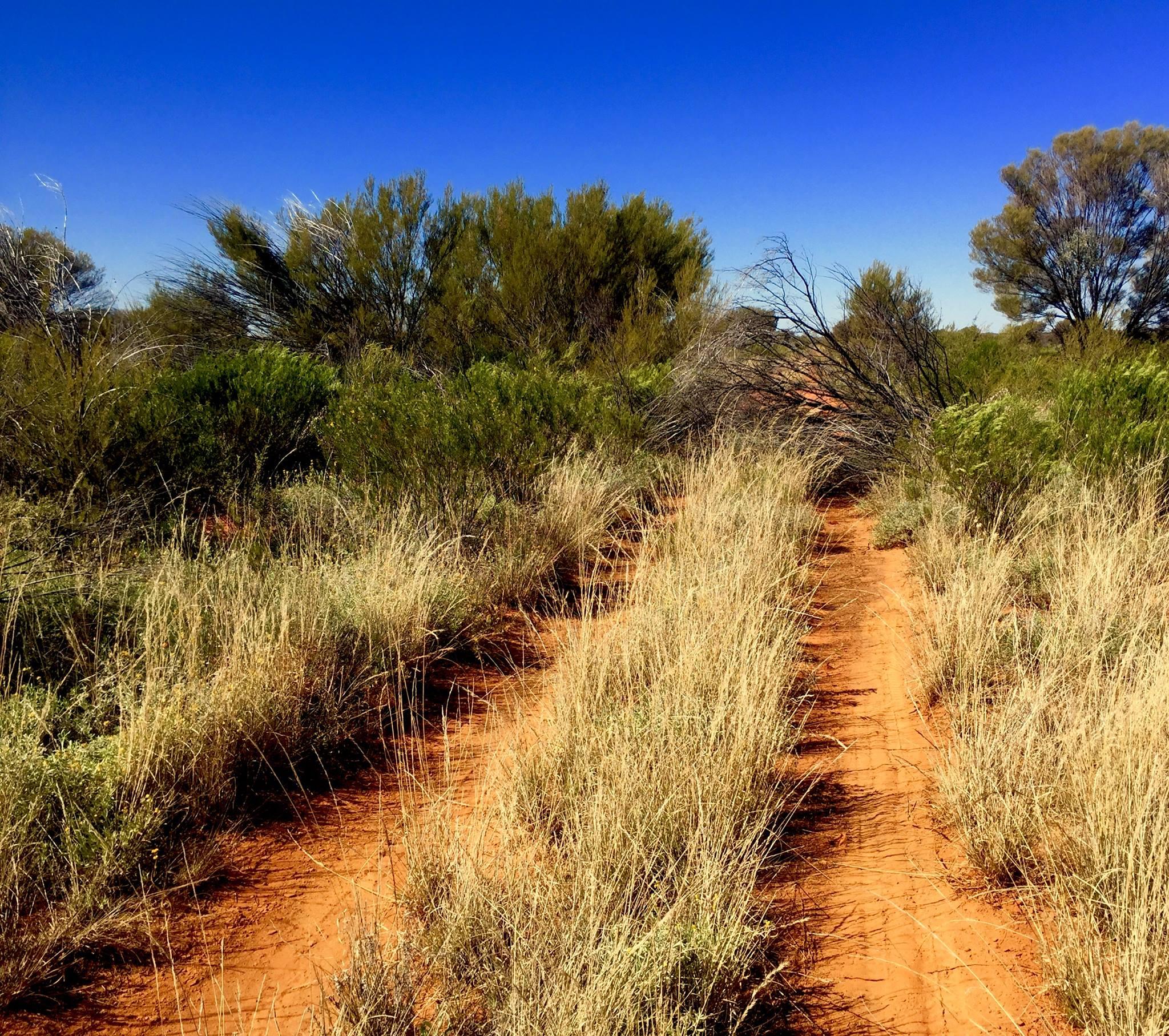 La piste de plus en plus étroite s'interrompt. Il conviendra de contourner l'obstacle. © Photo : Aboriginal Signature • Estrangin Gallery