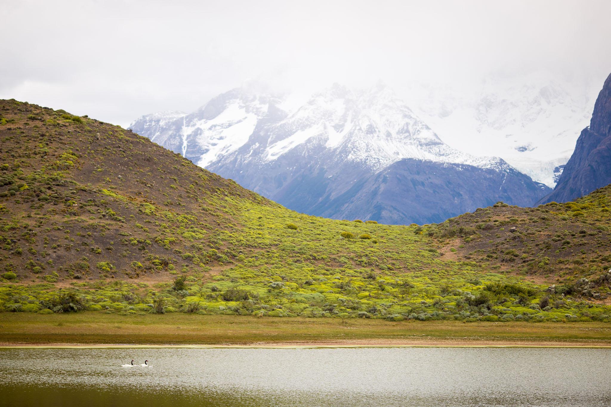 Wedding-Travellers-Overlanding-Destination-Wedding-Chile-Torres-del-Paine-black-necked-swan-laguna-lake-amarga