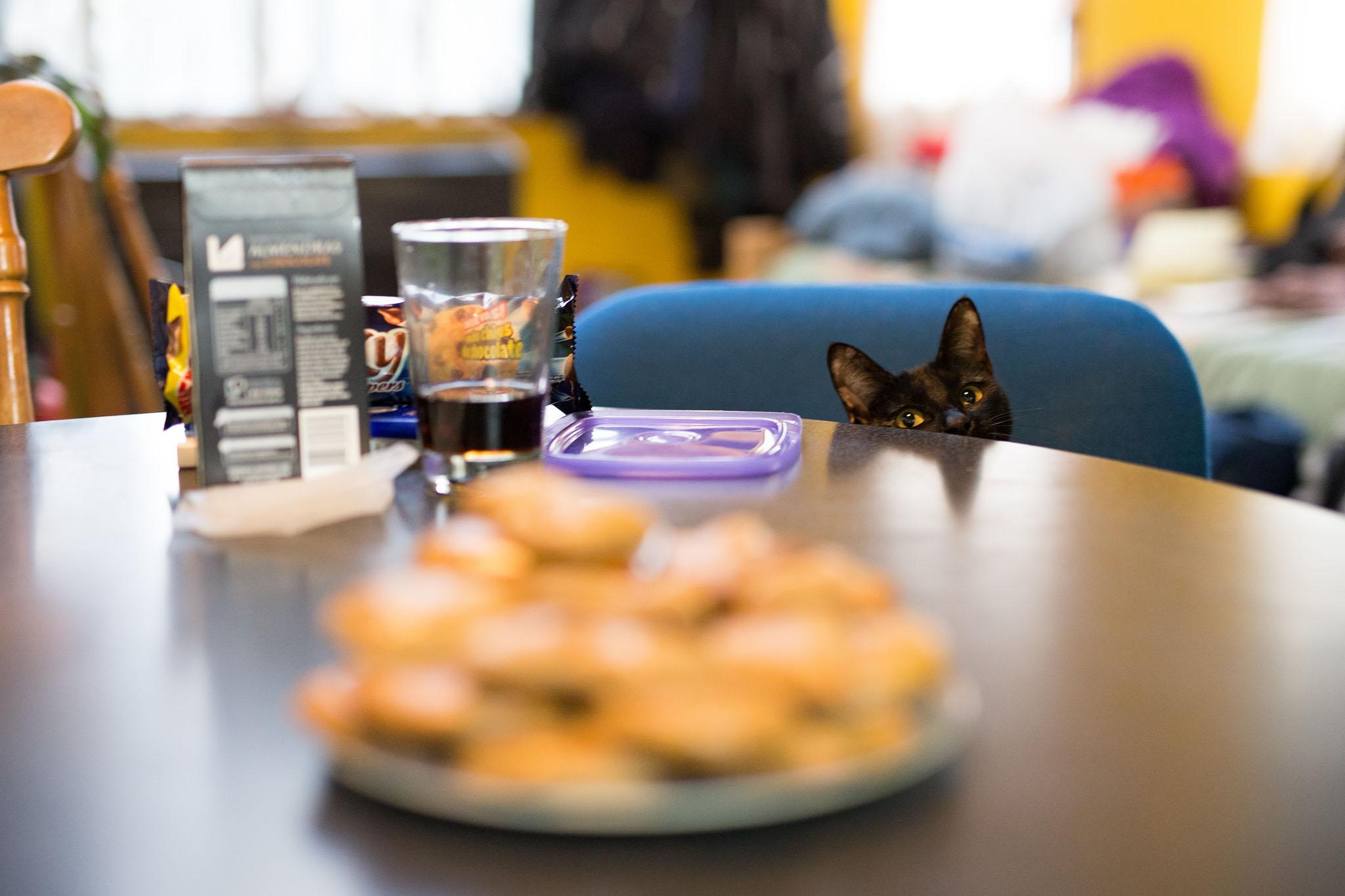 Wedding-travellers-ushuaia-argentina-christmas-baking-black-cat