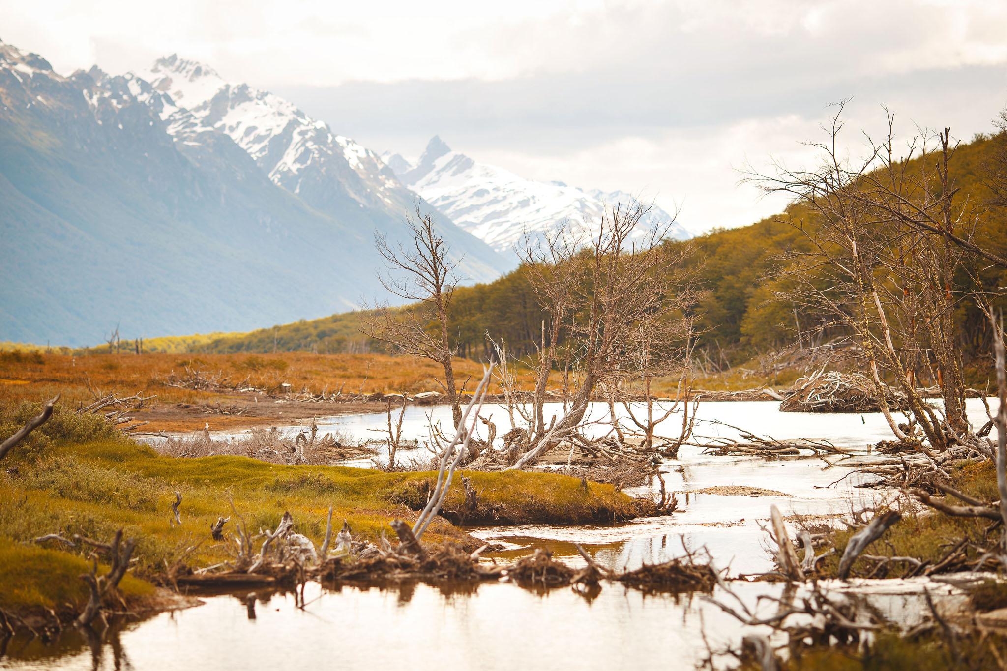 Wedding-travellers-ushuaia-argentina-laguna-esmeralda-beaver-damage