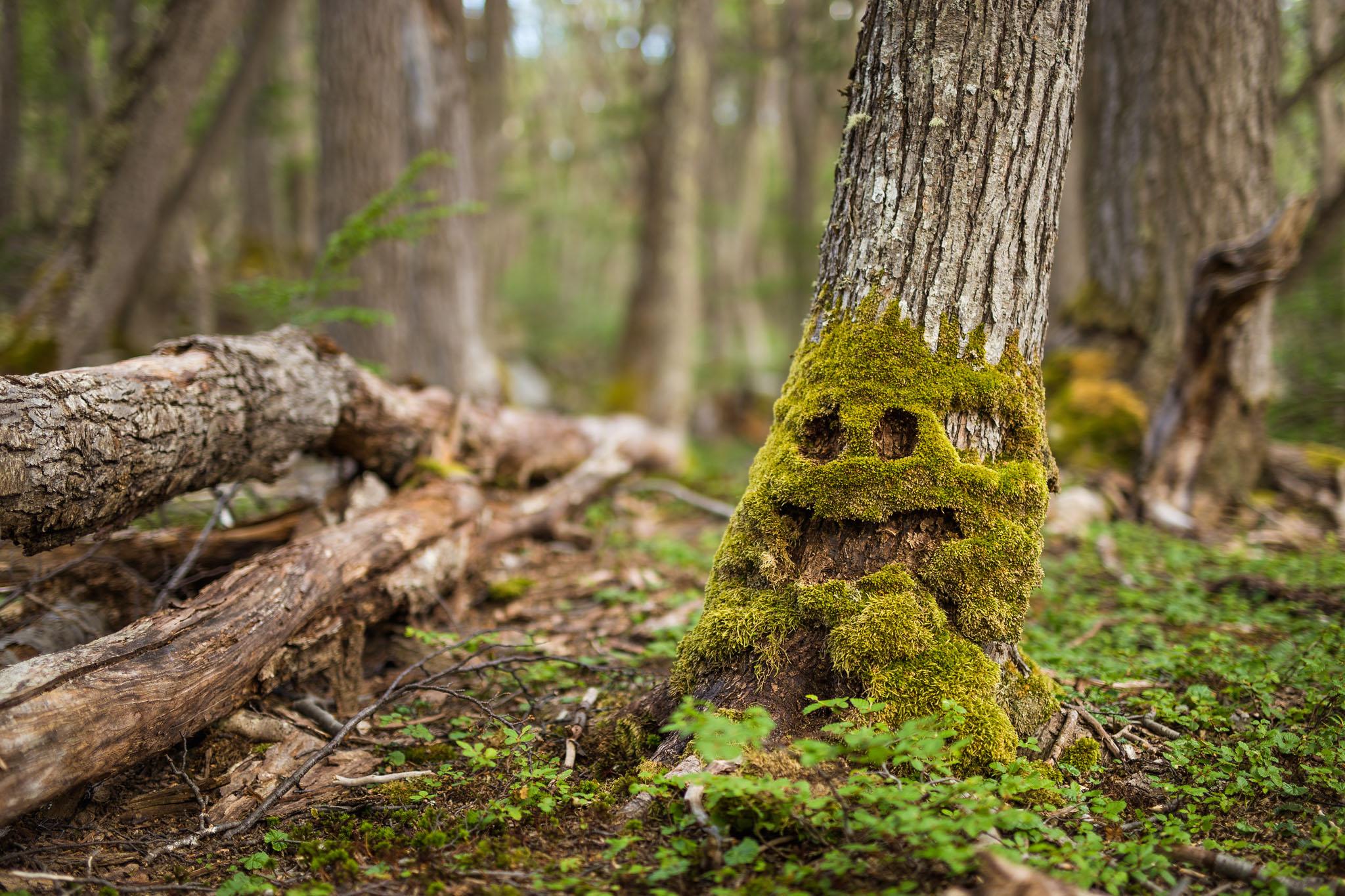 Wedding-travellers-ushuaia-argentina-laguna-esmeralda-smiling-tree-moss