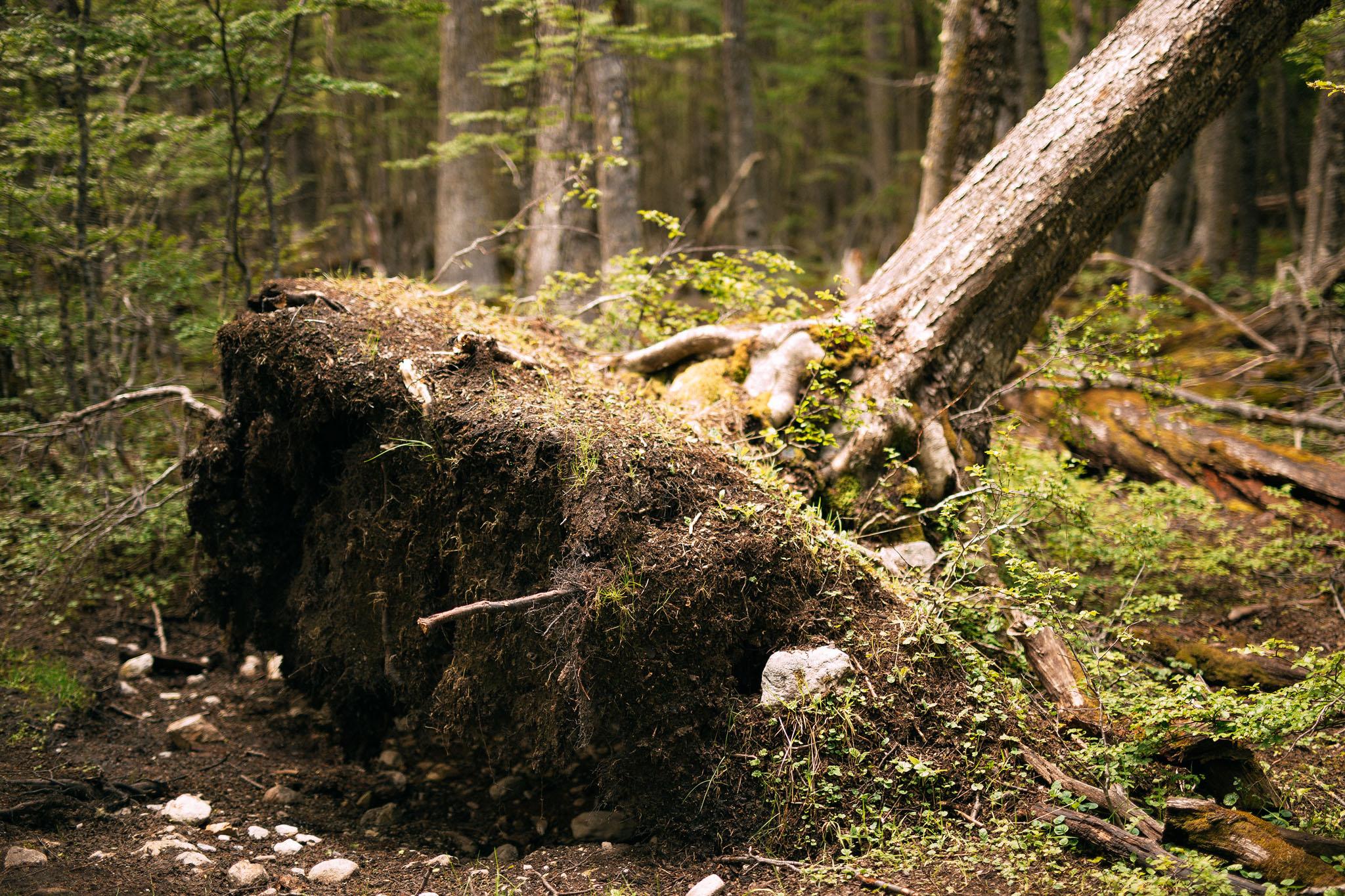 Wedding-travellers-ushuaia-argentina-laguna-esmeralda-fallen-tree