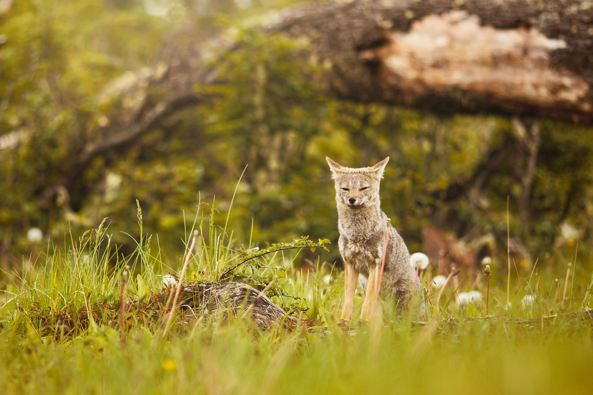 Wedding-travellers-ushuaia-argentina-fox-laguna-esmeralda