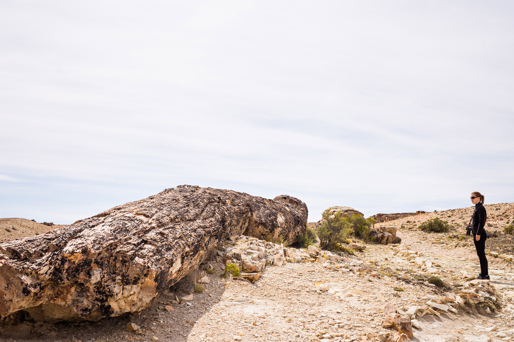 wedding-travellers-argentina-coast-petrified-forest-jaramillo-bosques-petrificados-fossil-tree-huge-enormous