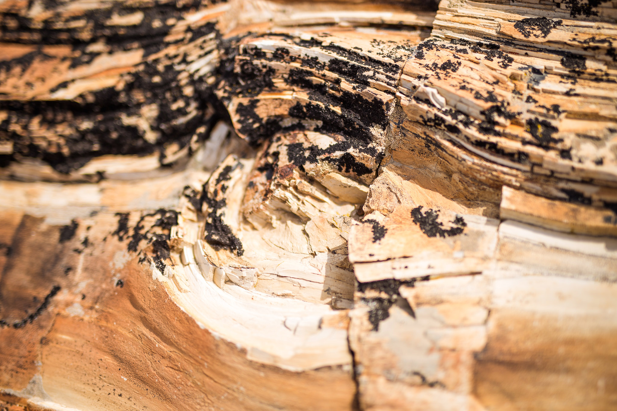 wedding-travellers-argentina-coast-petrified-forest-jaramillo-bosques-petrificados-fossil-tree-wood-structure-stone