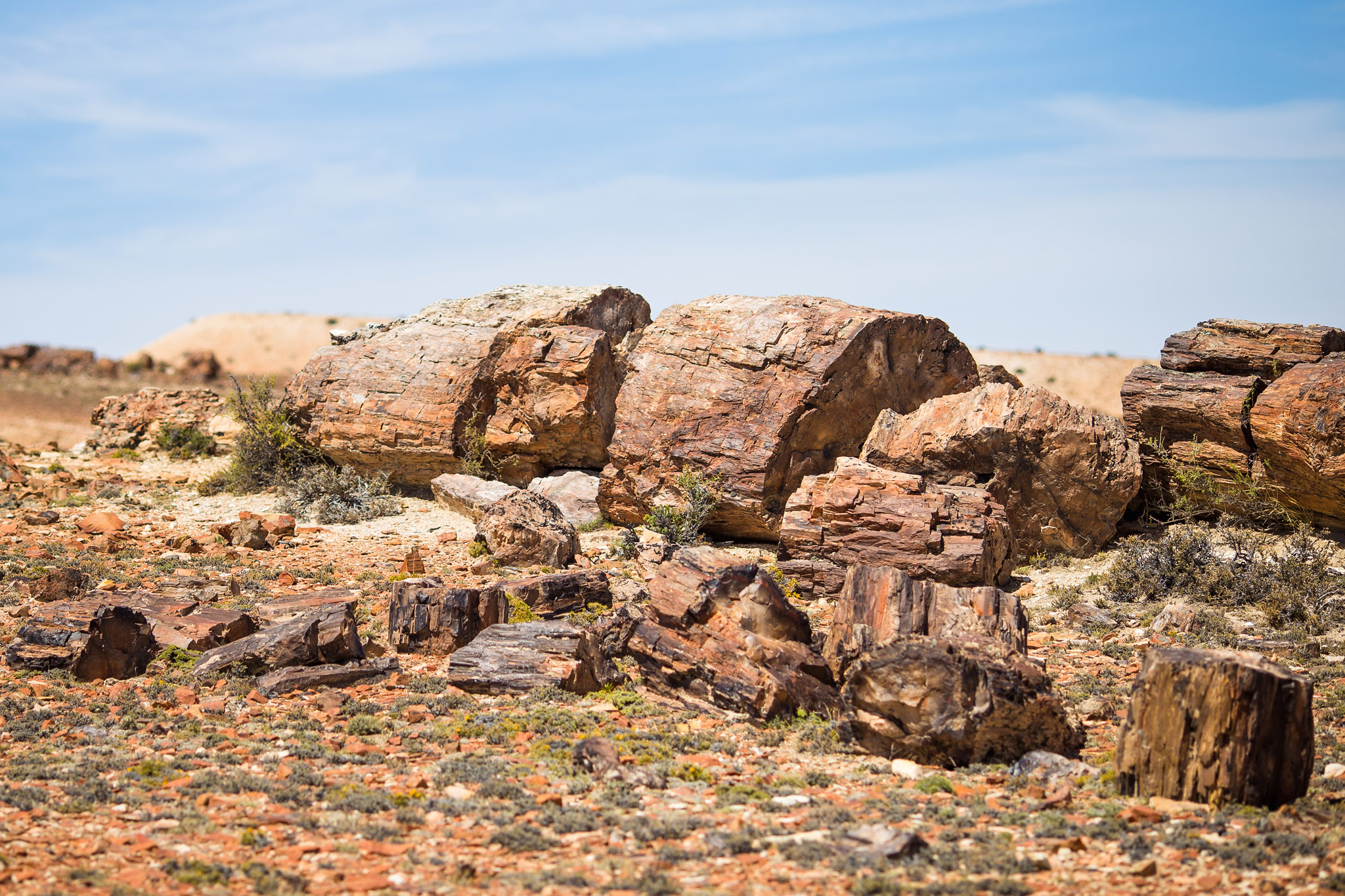 wedding-travellers-argentina-coast-petrified-forest-jaramillo-bosques-petrificados-fossil-tree-junk