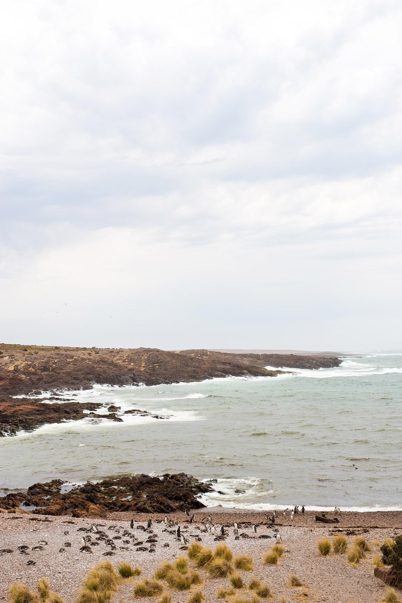 wedding-travellers-argentina-camarones-pinguins