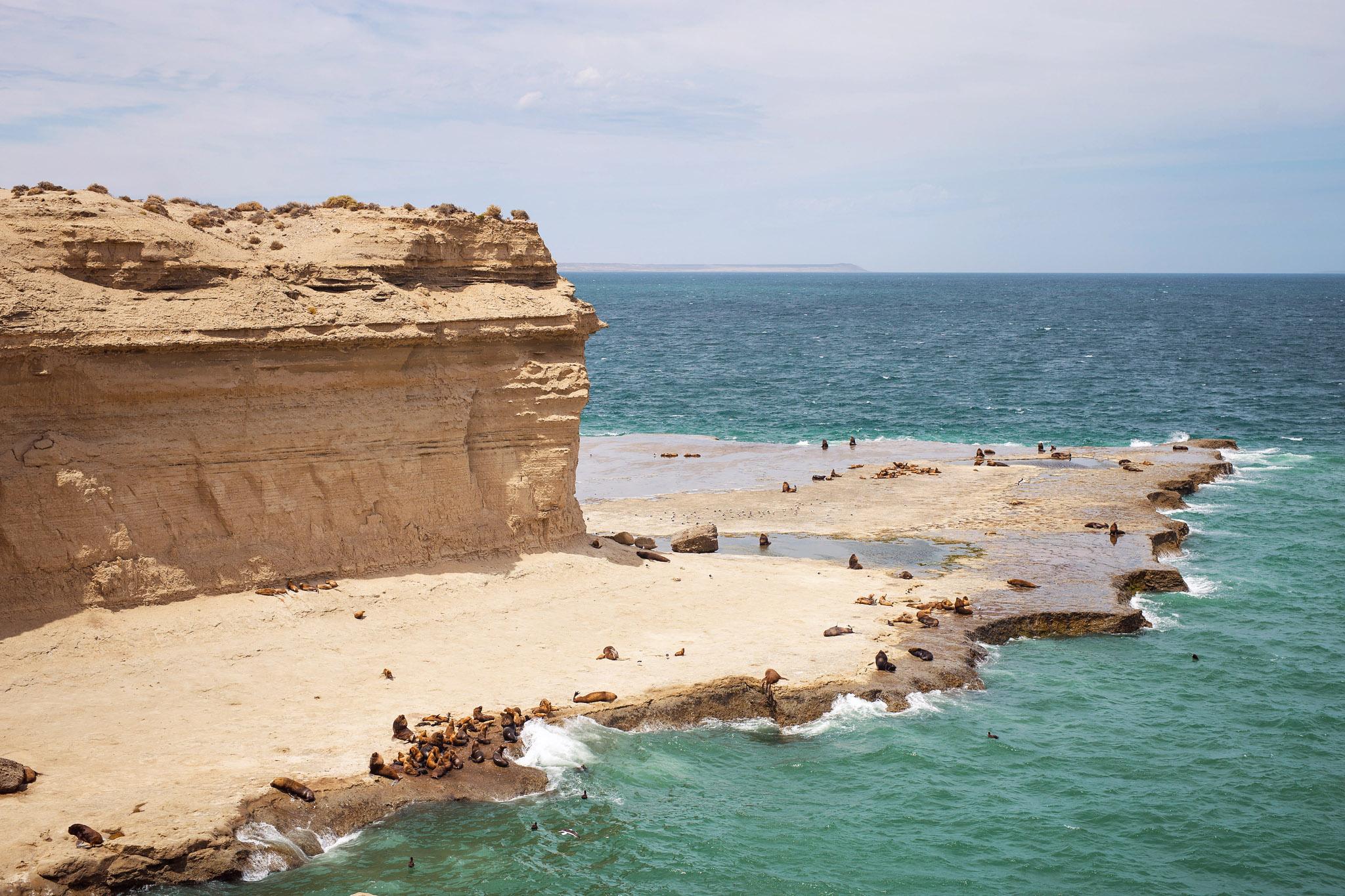 wedding-travellers-argentina-peninsula-valdes-sea-lion-shore-cliff
