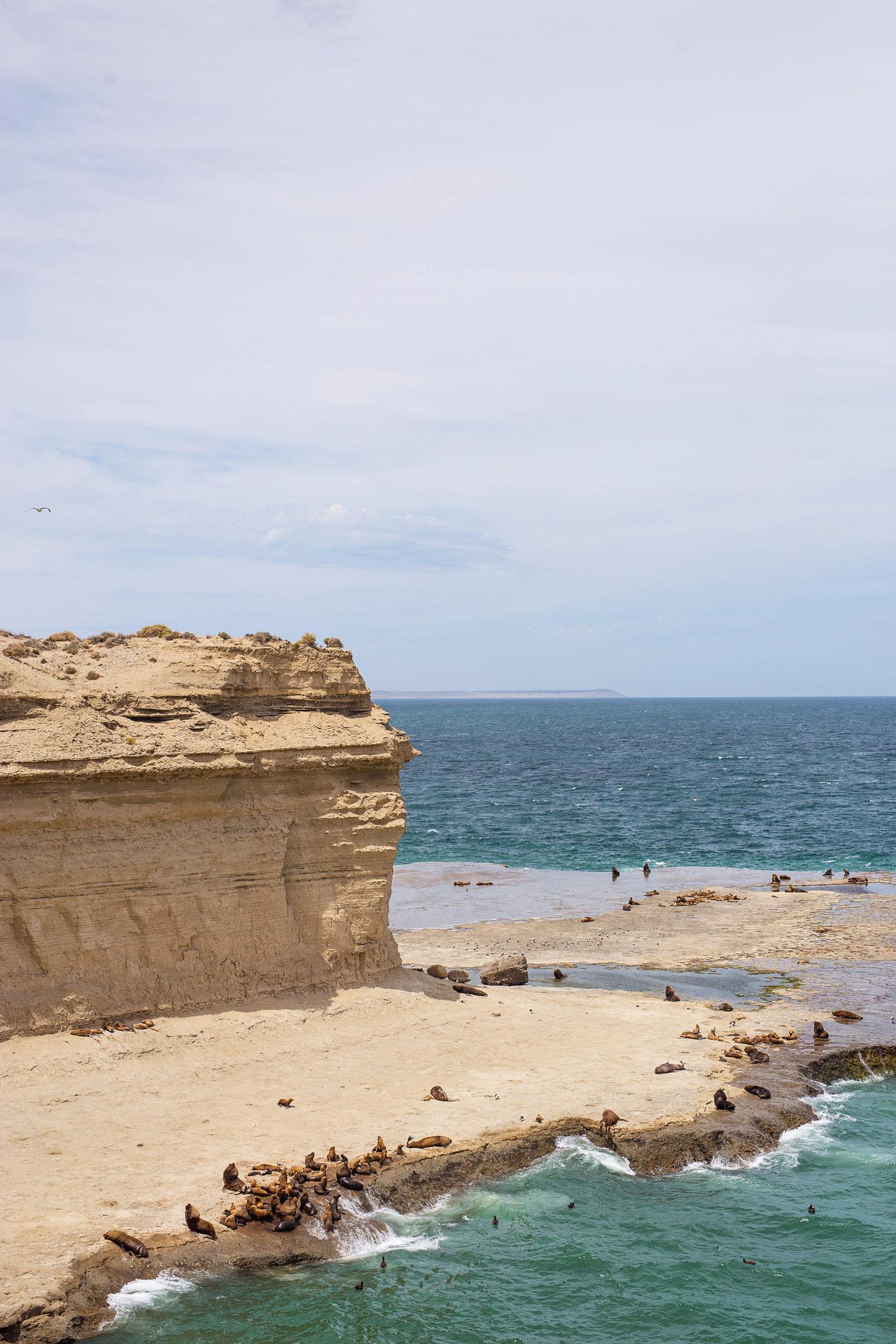 wedding-travellers-argentina-peninsula-valdes-sea-lion-cliff-shore