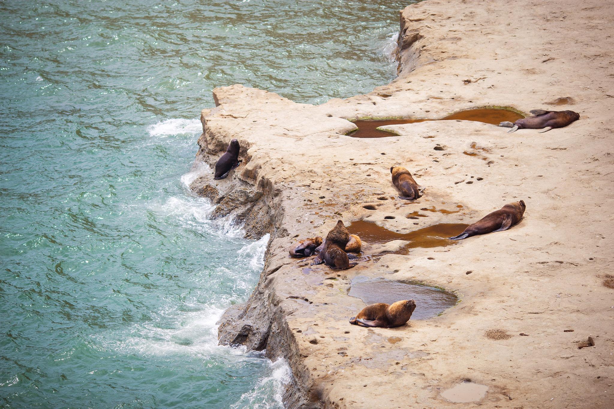 wedding-travellers-argentina-peninsula-valdes-sea-lion-shore-coast-cliff