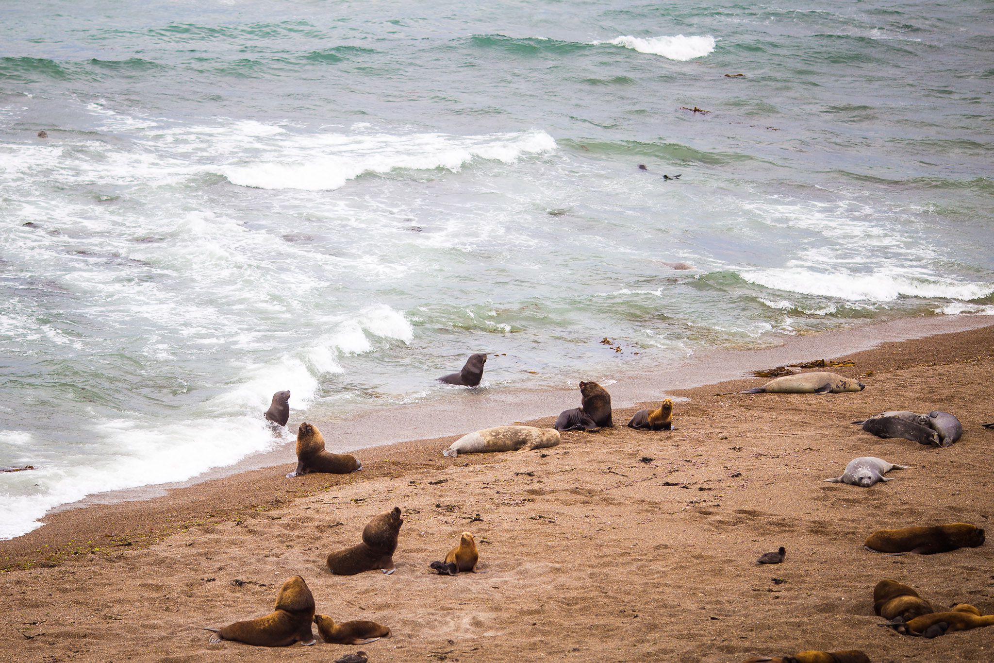 wedding-travellers-argentina-peninsula-valdes-sea-lion-beach