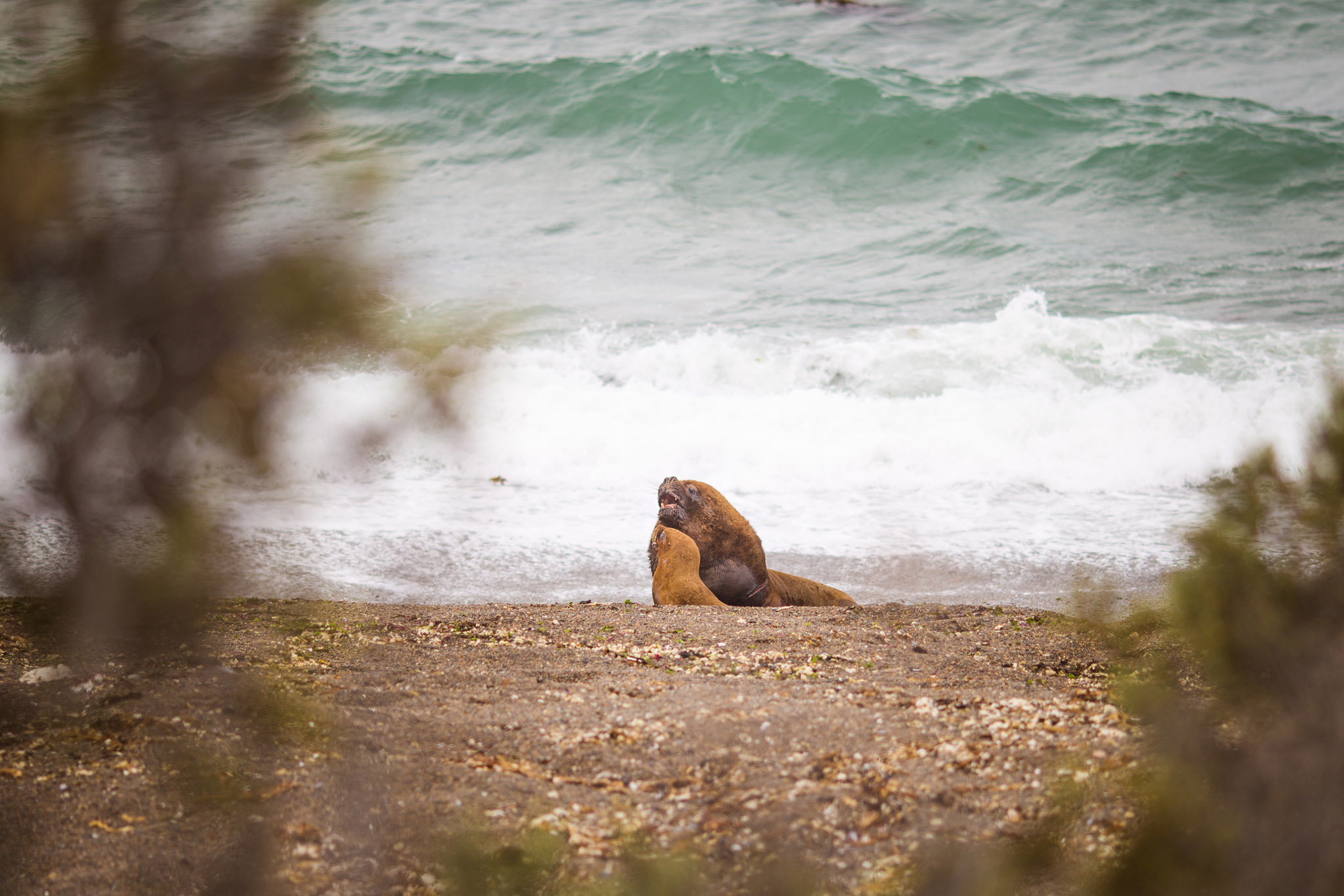 wedding-travellers-argentina-peninsula-valdes-sea-lion-couple
