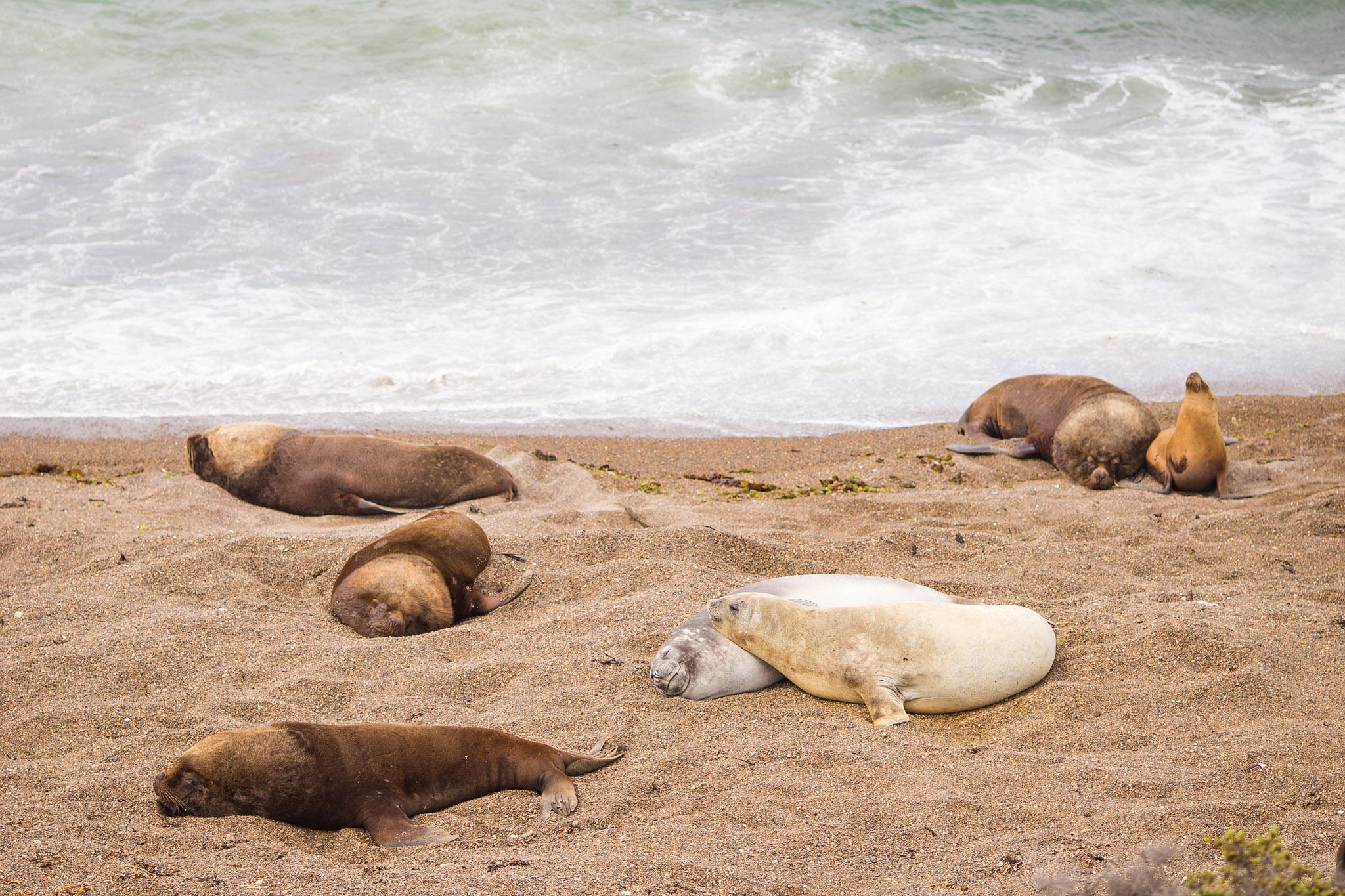 wedding-travellers-argentina-peninsula-valdes-sea-lion-elephant-seal