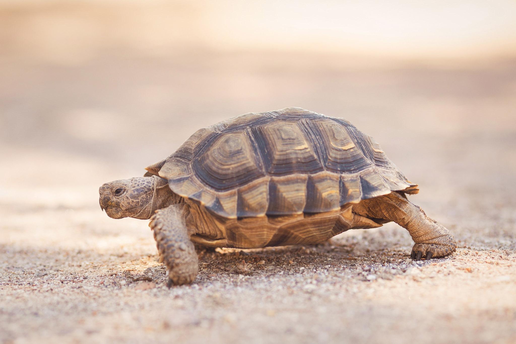 wedding-travellers-argentina-playas-doradas-turtle