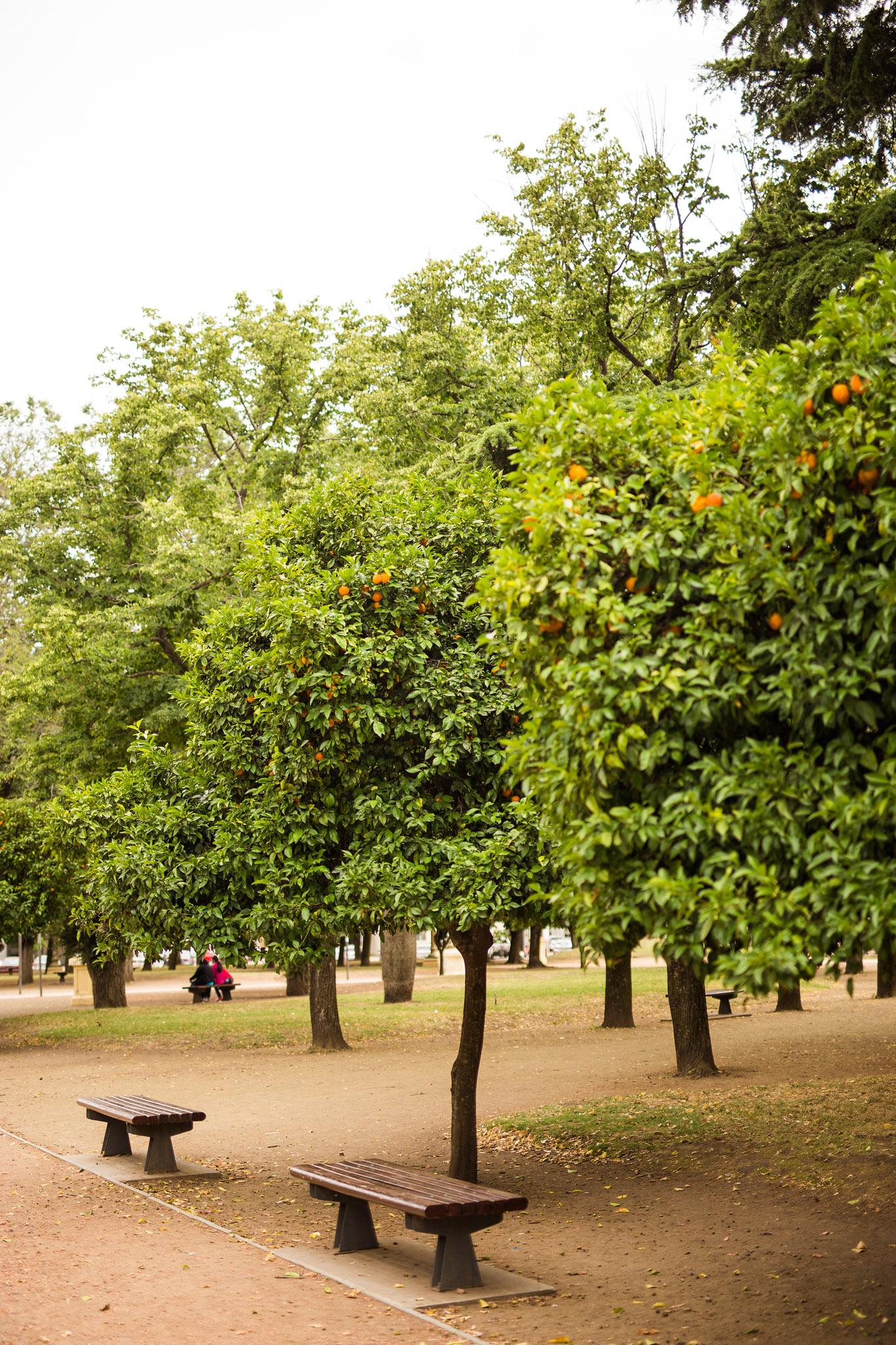 wedding-travellers-argentina-tandil-orange-tree