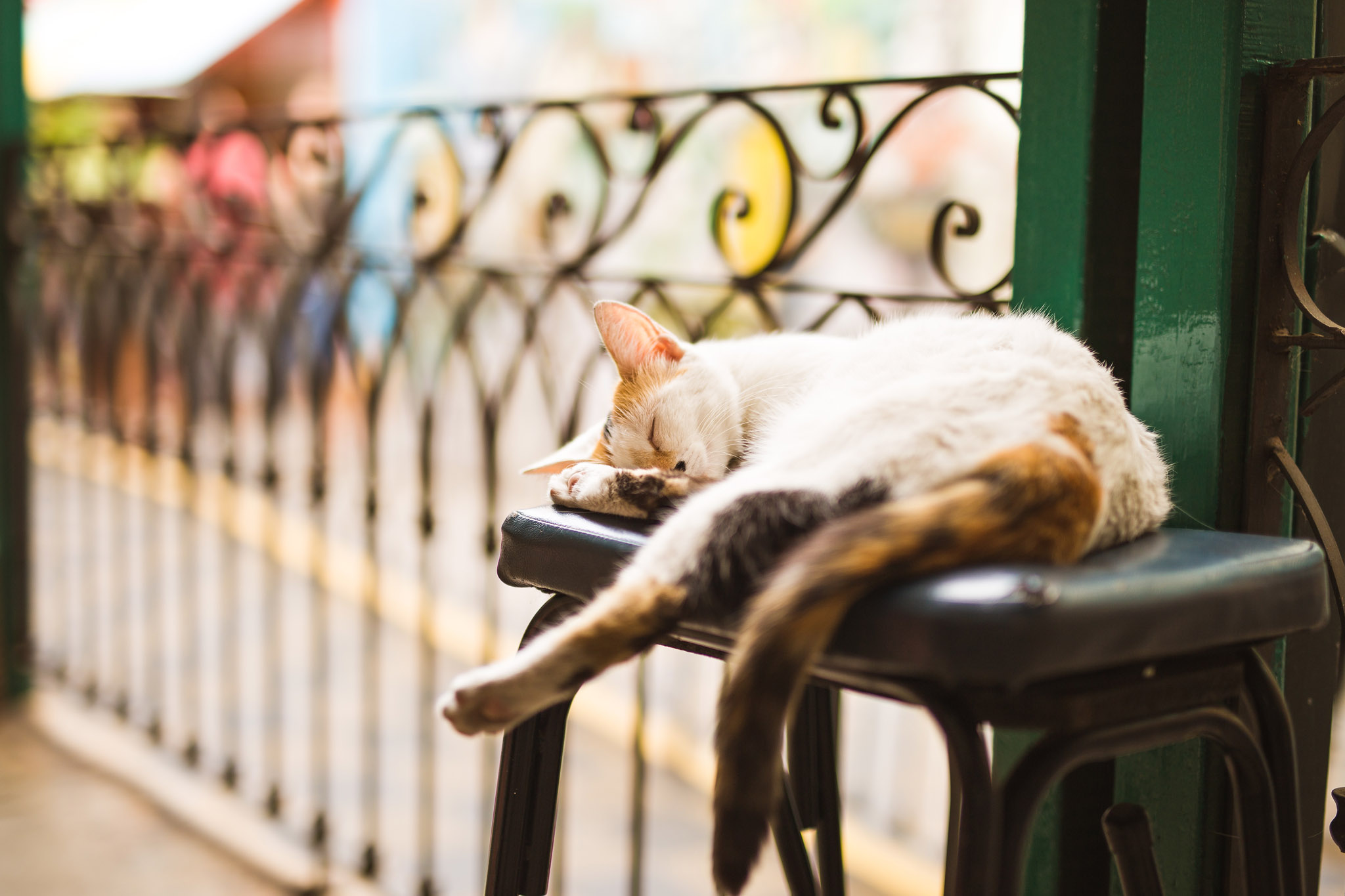 wedding-travellers-argentina-buenos-aires-la-boca-colorful-old-sleeping-stray-street-cat